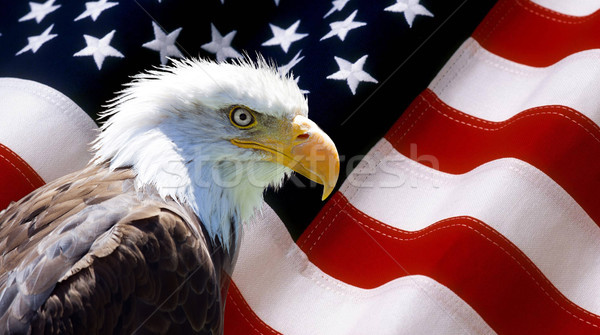 Stok fotoğraf: Kuzey · amerikan · kel · kartal · amerikan · bayrağı · duvar · kağıdı