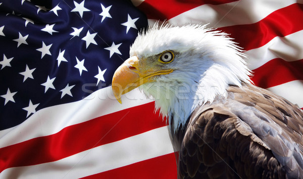 Noorden amerikaanse kaal adelaar Amerikaanse vlag behang Stockfoto © stefanoventuri