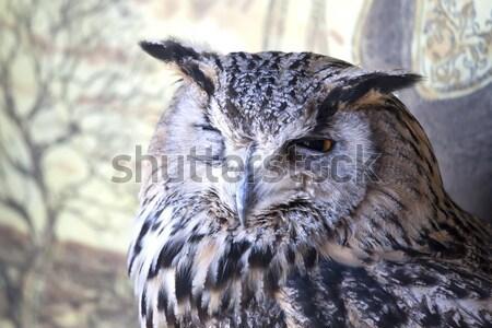 Retrato coruja olhos pássaro pena animais Foto stock © stefanoventuri