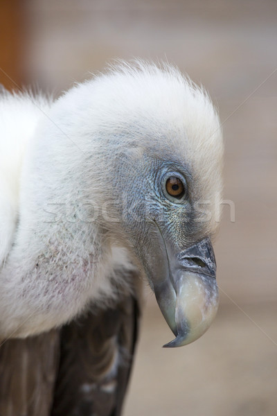 Retrato jovem branco olho natureza Foto stock © stefanoventuri