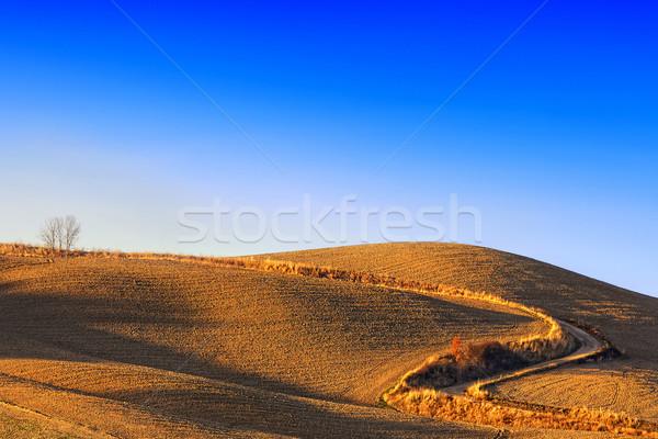 Altın yol Toskana gökyüzü mavi gökyüzü yol Stok fotoğraf © stefanoventuri