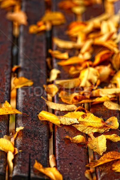Bank park hout zon bladeren Stockfoto © stefanoventuri