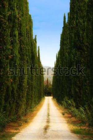 Toszkán vidék fa Stock fotó © stefanoventuri