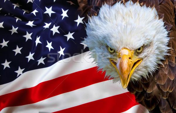 Zangado norte americano careca Águia bandeira americana Foto stock © stefanoventuri
