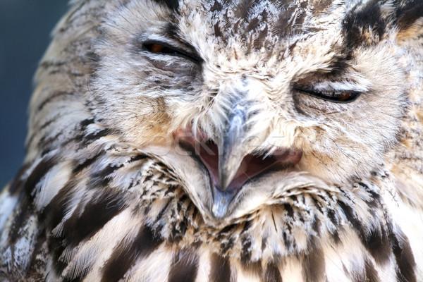 Stockfoto: Portret · oehoe · gezicht · oranje · vogel · nacht