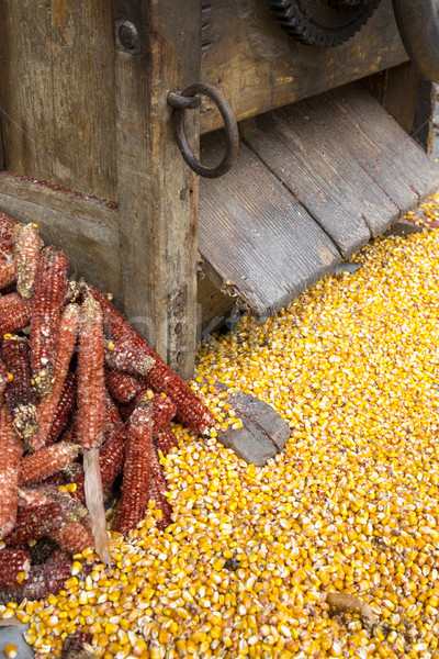 Freshly processed corn kernels with discarded cobs under a vinta Stock photo © stefanoventuri
