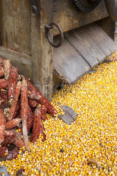 Taze mısır bağbozumu tarım kırmızı makine Stok fotoğraf © stefanoventuri