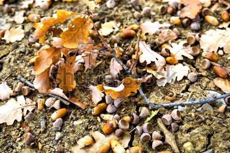Bladeren grond bos achtergrond kleur Stockfoto © stefanoventuri
