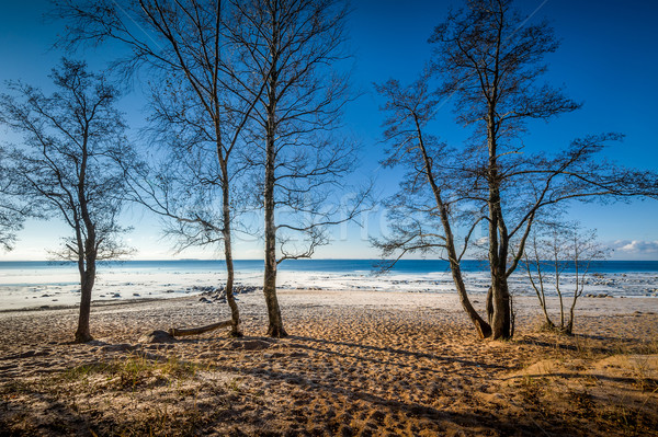 Soğuk gün sonbahar plaj manzara ağaçlar Stok fotoğraf © Steffus