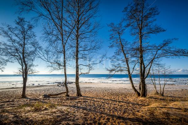 Frío día otono playa paisaje árboles Foto stock © Steffus