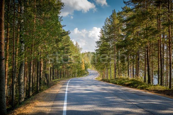 道路 北方 森林 美しい アスファルト 両方 ストックフォト © Steffus