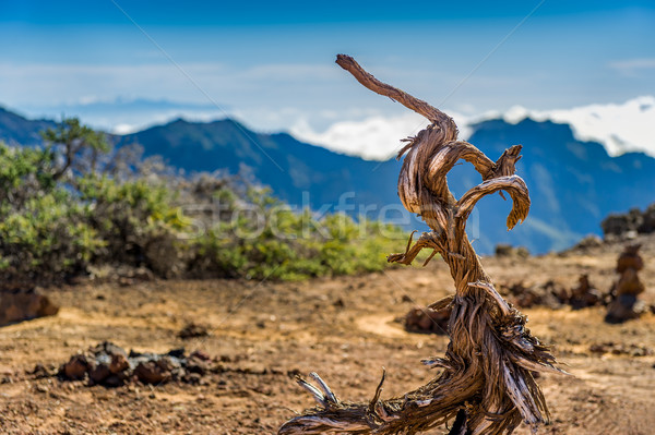 Foto stock: Velho · secar · árvore · vulcânico · montanhas · paisagem