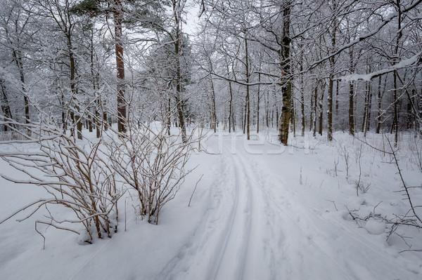 Ski piste Stock photo © Steffus
