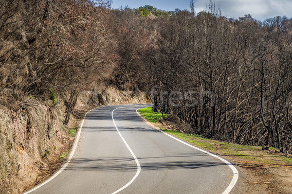Road thru burned forest Stock photo © Steffus