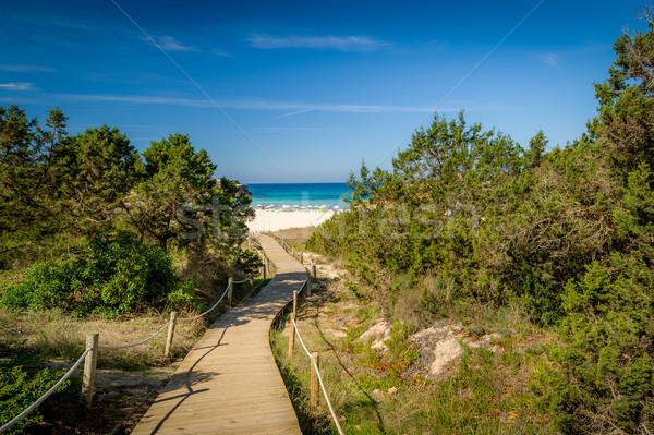 пути морем песок пляж способом Сток-фото © Steffus