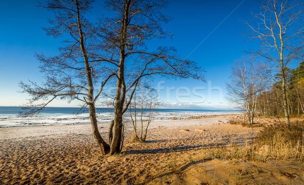 Autumn on the beach Stock photo © Steffus