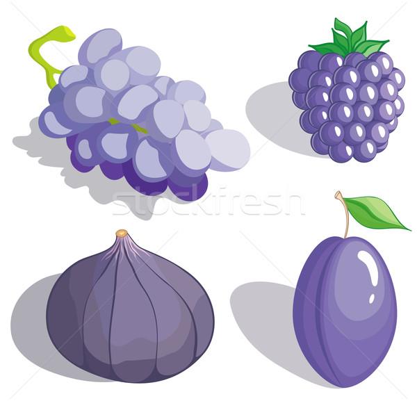 Lilac fruit Stock photo © Stellis