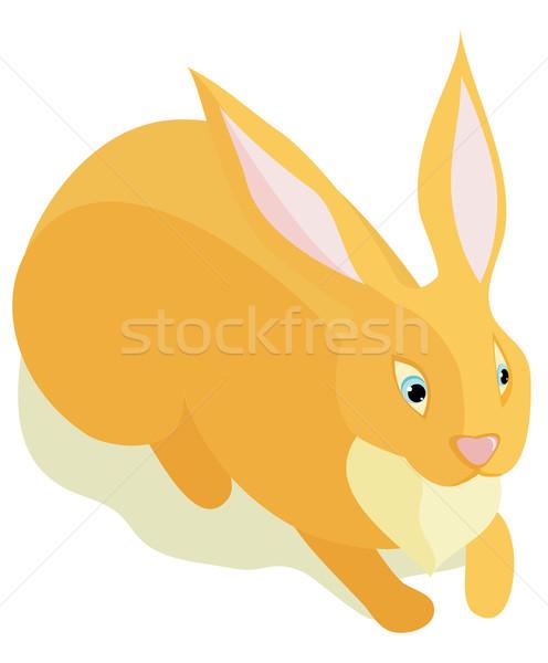 Sitting fluffy rabbit Stock photo © Stellis