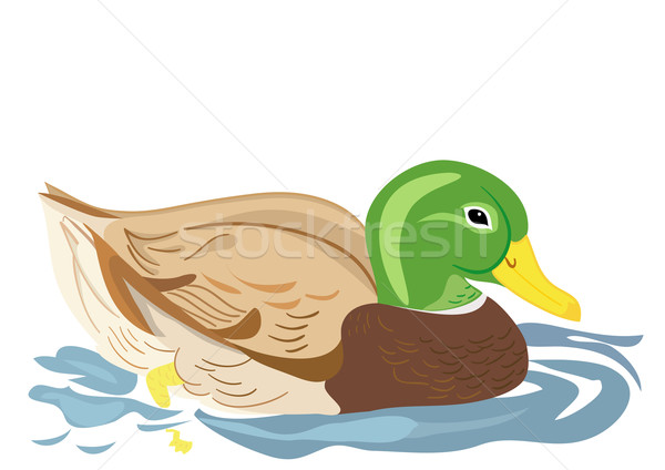 Beautiful duck swimming Stock photo © Stellis