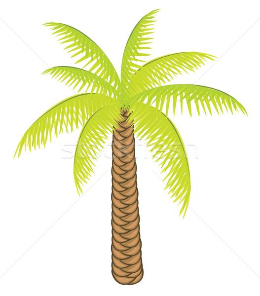 Vektor szín pálmafa terv fehér háttér Stock fotó © Stellis