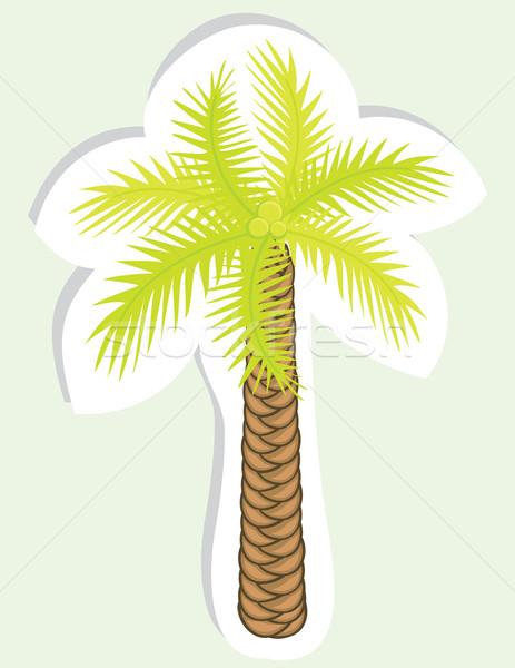 Vektor szín pálmafa terv matrica tengerpart Stock fotó © Stellis
