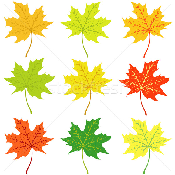 Autumn maple leaflets Stock photo © Stellis