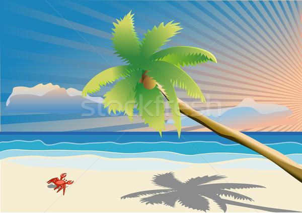 Pálmafa tengerpart égbolt tájkép tenger kék Stock fotó © Stellis