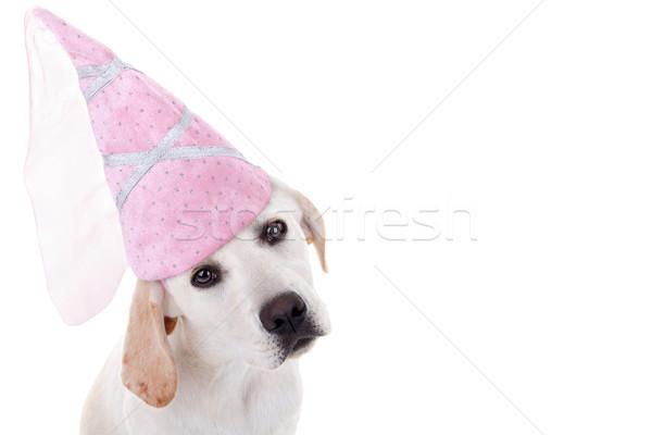 Köpek prenses Labrador halloween köpek yavrusu kostüm Stok fotoğraf © Stephanie_Zieber