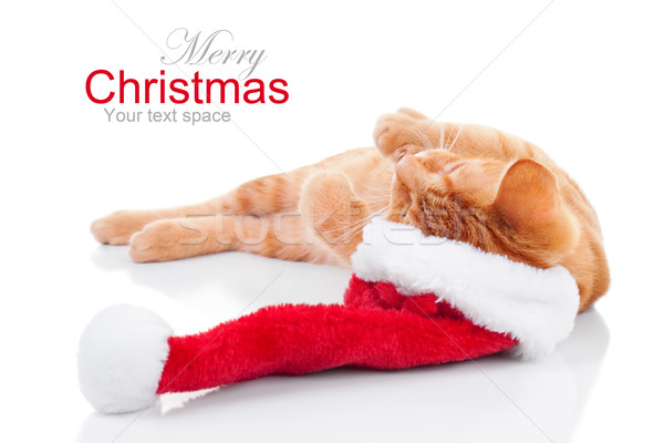 Cat Christmas Dreams Stock photo © Stephanie_Zieber