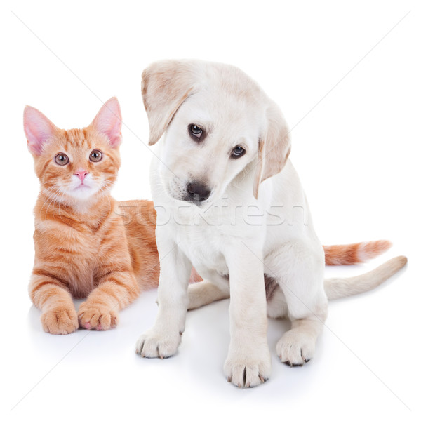 Chiot chien chaton chat animaux de compagnie animal Photo stock © Stephanie_Zieber