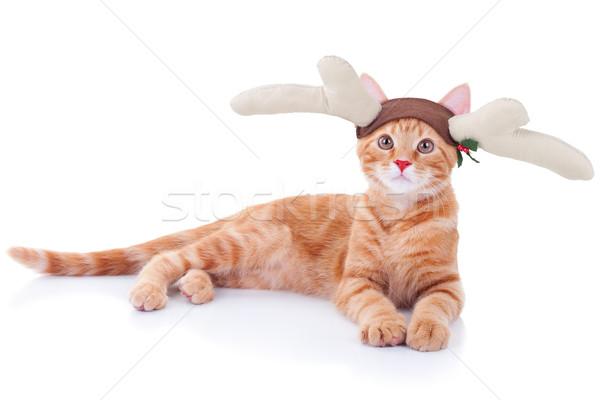 Rudolph Reindeer Cat Stock photo © Stephanie_Zieber