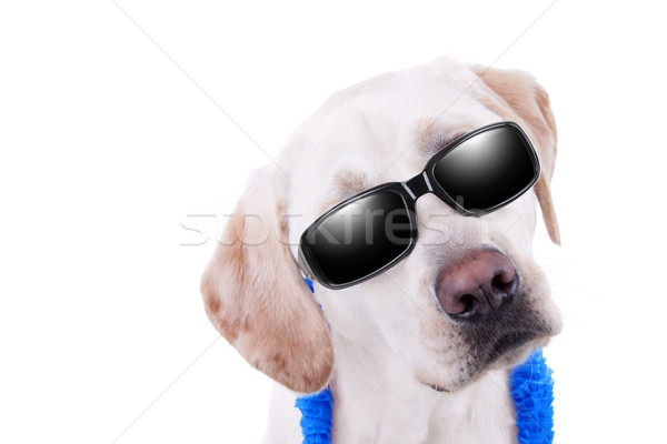 Sunglasses Dog Vacation Stock photo © Stephanie_Zieber