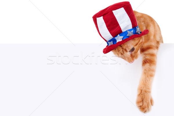 Patriótico gato signo mascota banner Foto stock © Stephanie_Zieber