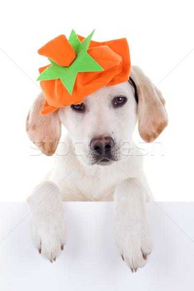 Autumn Dog Sign Stock photo © Stephanie_Zieber