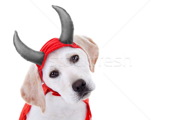Halloween Dog Costume Stock photo © Stephanie_Zieber