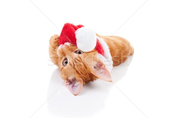 Photo stock: Noël · chat · méchant · chaton · chapeau