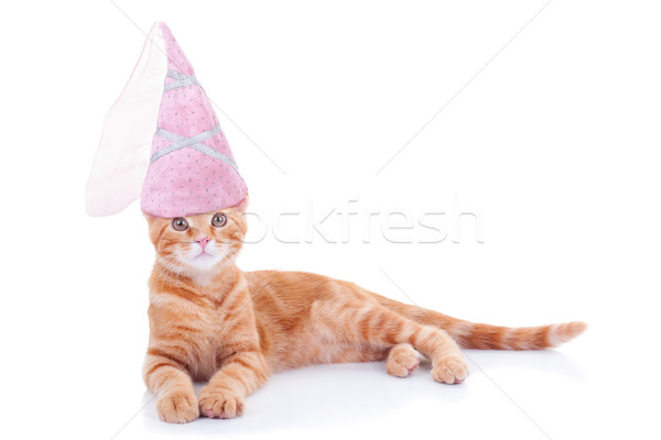 Princess Cat Stock photo © Stephanie_Zieber