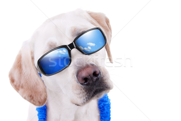 Summer Holiday Dog Stock photo © Stephanie_Zieber