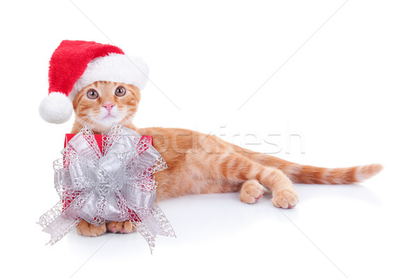 Christmas Cat Gift Stock photo © Stephanie_Zieber