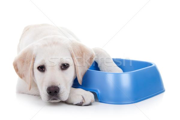 Hungry Dog Stock photo © Stephanie_Zieber