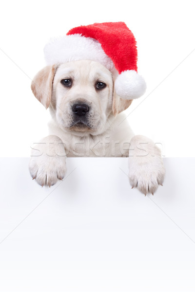 Christmas Banner Dog Stock photo © Stephanie_Zieber