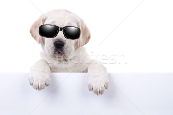 Cool zomervakantie hond teken partij star Stockfoto © Stephanie_Zieber