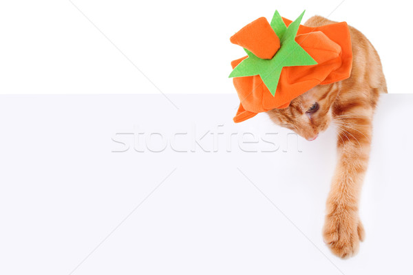 Pompoen kat teken halloween dankzegging banner Stockfoto © Stephanie_Zieber