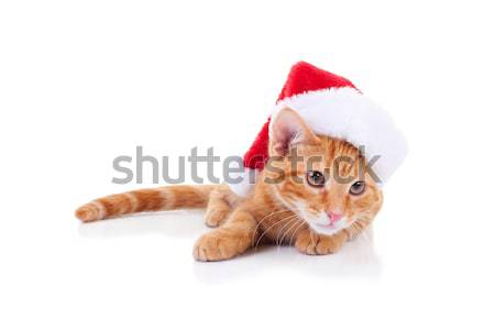 Christmas Santa Cat Stock photo © Stephanie_Zieber