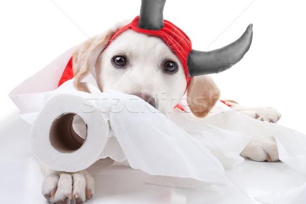 Stockfoto: Halloween · duivel · hond · grappig · schuldig · labrador · retriever