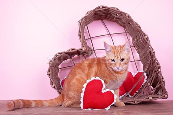 Valentin chat rouge coeurs coeur panier Photo stock © Stephanie_Zieber