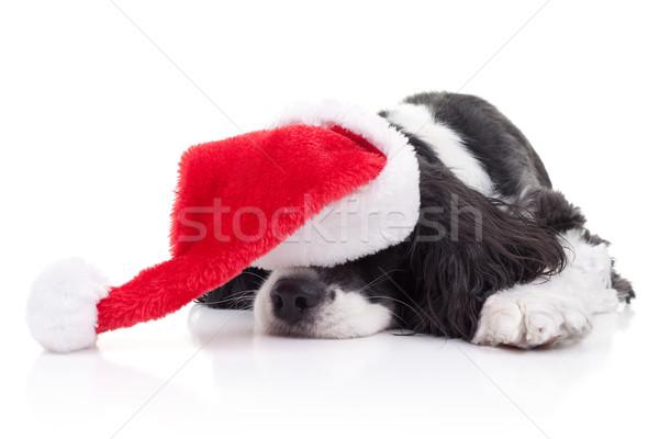 Zdjęcia stock: Psa · christmas · marzenia · Święty · mikołaj · hat · tle