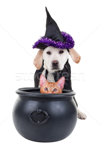 Halloween Witch Stock photo © Stephanie_Zieber