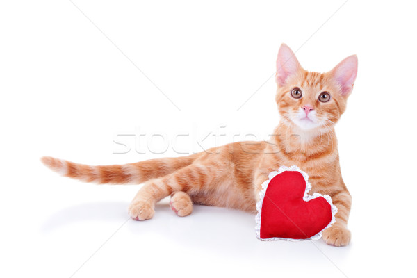Valentijn kat hart geïsoleerd gelukkig verjaardag Stockfoto © Stephanie_Zieber