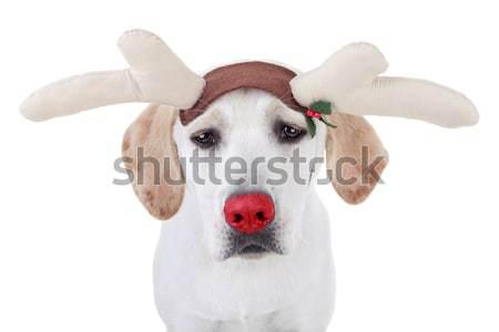 Zdjęcia stock: Renifer · funny · christmas · psa · tle · smutne